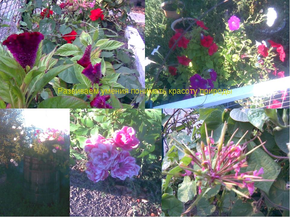 Развиваем умения понимать красоту природы