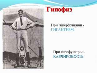 Гипофиз При гипофункции - КАРЛИКОВОСТЬ При гиперфункции - ГИГАНТИЗМ