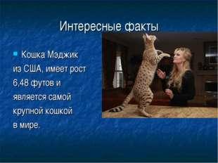 Интересные факты Кошка Мэджик из США, имеет рост 6,48 футов и является самой