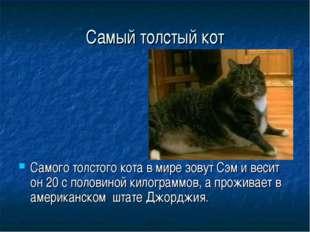 Самый толстый кот Самого толстого кота в мире зовут Сэм и весит он 20 с полов