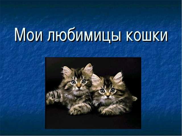 Мои любимицы кошки