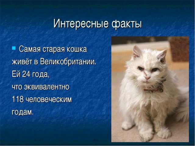 Интересные факты Самая старая кошка живёт в Великобритании. Ей 24 года, что э...