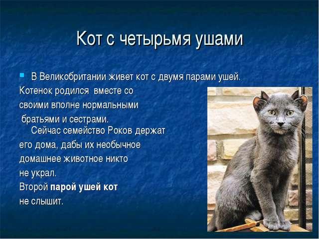 Кот с четырьмя ушами В Великобритании живет кот с двумя парами ушей. Котенок...