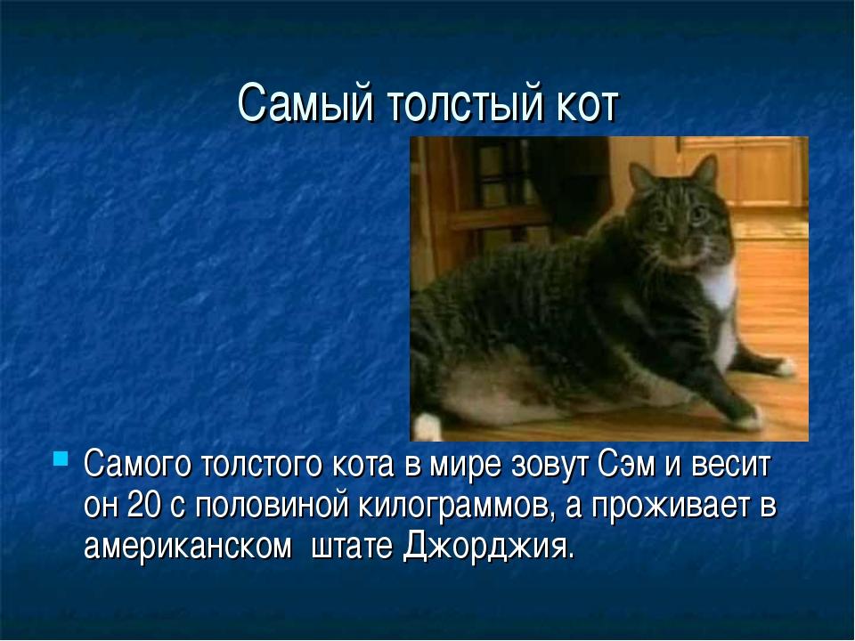 Самый толстый кот Самого толстого кота в мире зовут Сэм и весит он 20 с полов...