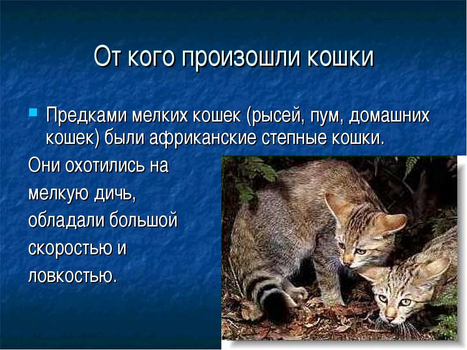 От кого произошли кошки Предками мелких кошек (рысей, пум, домашних кошек) бы...