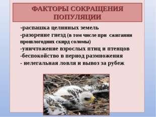 .  -распашка целинных земель -разорение гнезд (в том числе при сжигании прош