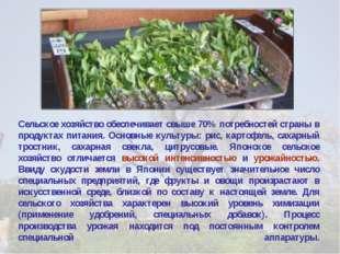 Сельское хозяйство обеспечивает свыше 70% потребностей страны в продуктах пит