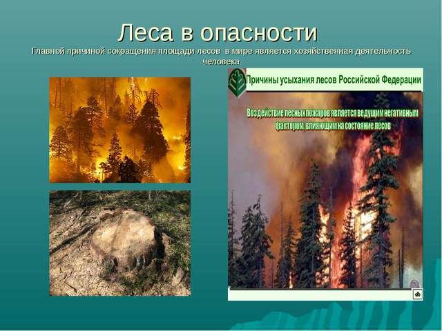 Леса в опасности Главной причиной сокращения площади лесов в мире является хо...