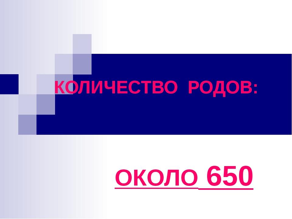 КОЛИЧЕСТВО РОДОВ: ОКОЛО 650