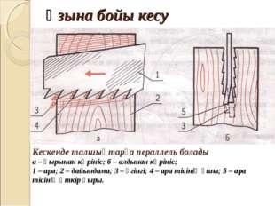 Ұзына бойы кесу Кескенде талшықтарға пераллель болады а – қырынан көрініс; б