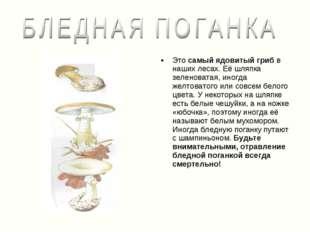 Это самый ядовитый гриб в наших лесах. Её шляпка зеленоватая, иногда желтоват