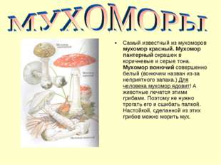 Самый известный из мухоморов мухомор красный. Мухомор пантерный окрашен в кор