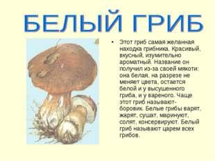Этот гриб самая желанная находка грибника. Красивый, вкусный, изумительно аро