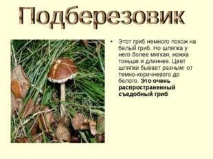 Этот гриб немного похож на белый гриб. Но шляпка у него более мягкая, ножка т