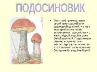 Этот гриб примечателен своей ярко-красной или оранжевой шляпкой. Но не у всех