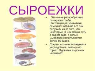 Это очень разнообразные по окраске грибы. Настоящая разноцветная семейка! На