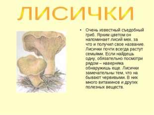 Очень известный съедобный гриб. Ярким цветом он напоминает лисий мех, за что