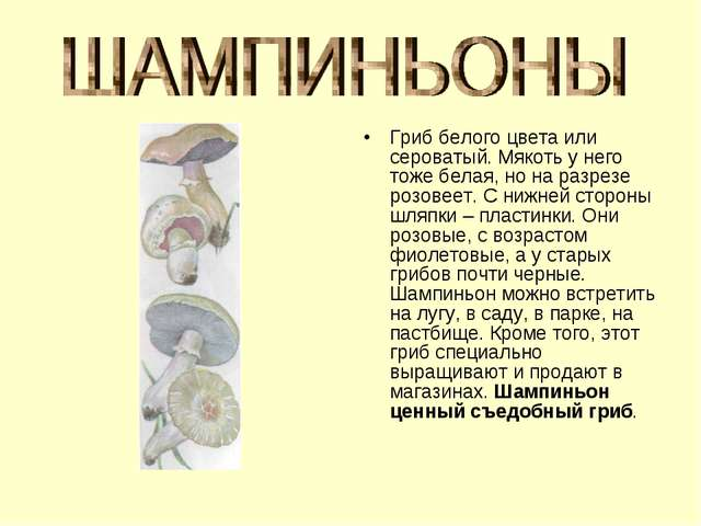 Гриб белого цвета или сероватый. Мякоть у него тоже белая, но на разрезе розо...
