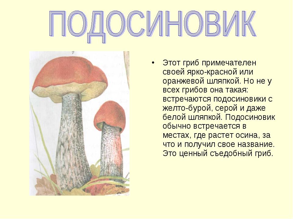 Этот гриб примечателен своей ярко-красной или оранжевой шляпкой. Но не у всех...