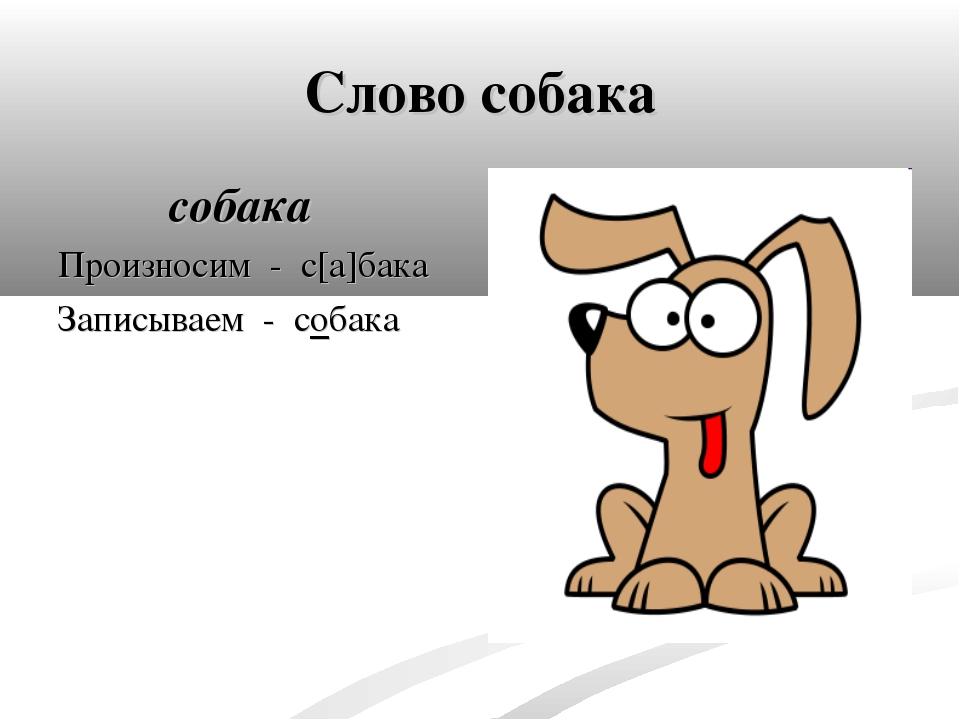 Слово собака собака Произносим - с[а]бака Записываем - собака