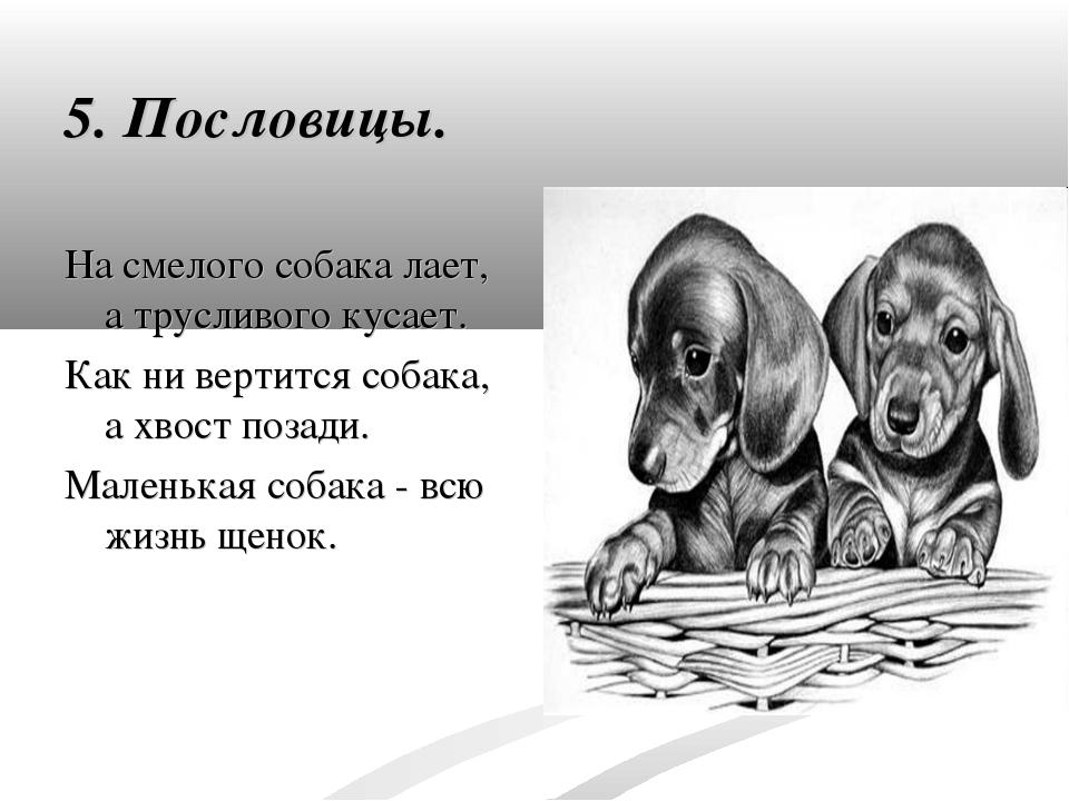 5. Пословицы. На смелого собака лает, а трусливого кусает. Как ни вертится со...