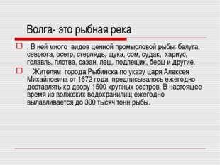Волга- это рыбная река . В ней много видов ценной промысловой рыбы: белуга,