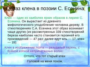 Образ клена в поэзии С. Есенина Клен — один из наиболее ярких образов в лирик