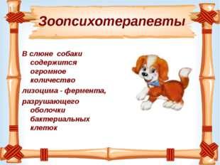 Зоопсихотерапевты В слюне собаки содержится огромное количество лизоцима - ф