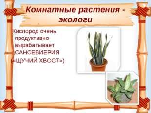 Комнатные растения - экологи Кислородочень продуктивно вырабатывает САНСЕВИЕ