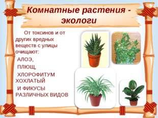 Комнатные растения - экологи От токсинови от других вредных веществ с улицы