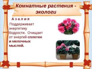 Комнатные растения - экологи А з а л и я Поддерживает энергетику бодрости. О