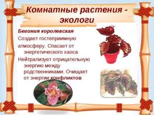 Комнатные растения - экологи Бегония королевская Создаетгостеприимную атмо