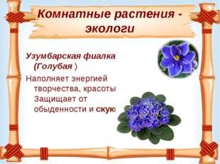 Комнатные растения - экологи Узумбарская фиалка (Голубая ) Наполняет энергией