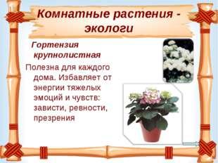 Комнатные растения - экологи Гортензия крупнолистная Полезнадля каждого дома