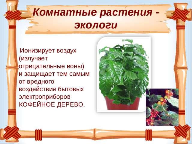 Комнатные растения - экологи Ионизируетвоздух (излучает отрицательные ионы)...