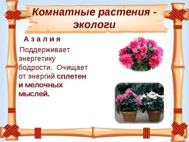 Комнатные растения - экологи А з а л и я Поддерживает энергетику бодрости. О...