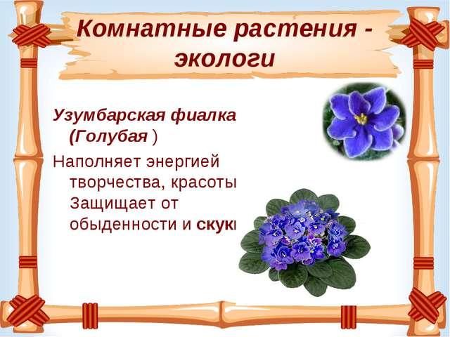 Комнатные растения - экологи Узумбарская фиалка (Голубая ) Наполняет энергией...