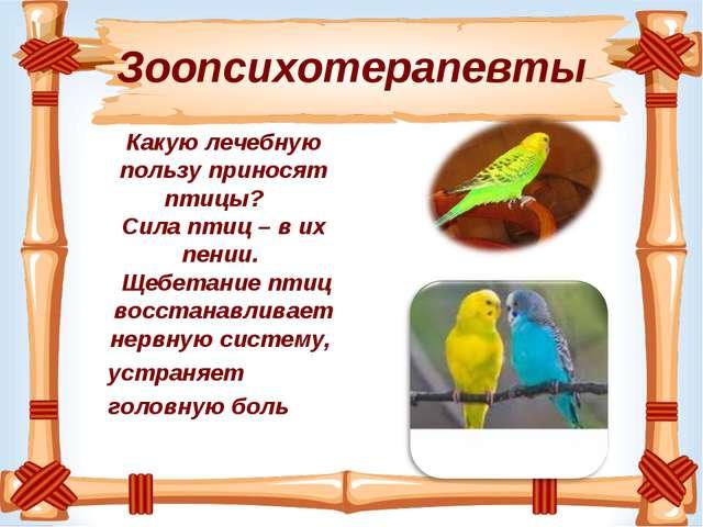 Зоопсихотерапевты Какую лечебную пользу приносят птицы?  Сила птиц – в их п...