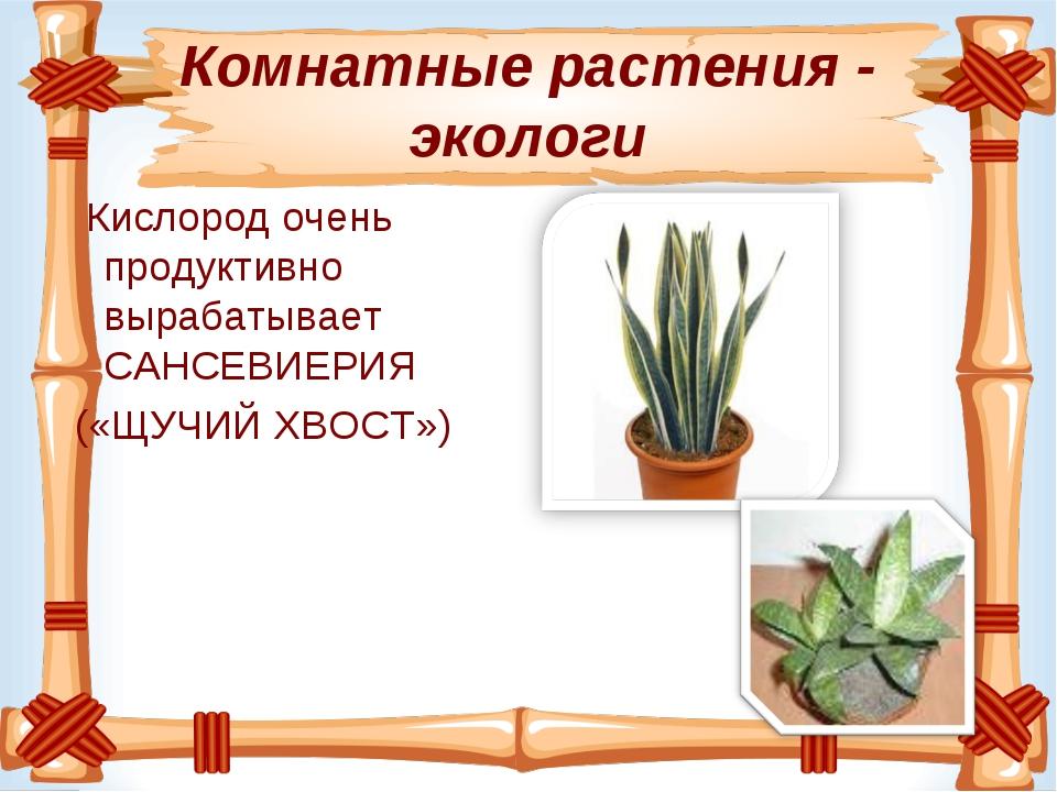 Комнатные растения - экологи Кислородочень продуктивно вырабатывает САНСЕВИЕ...