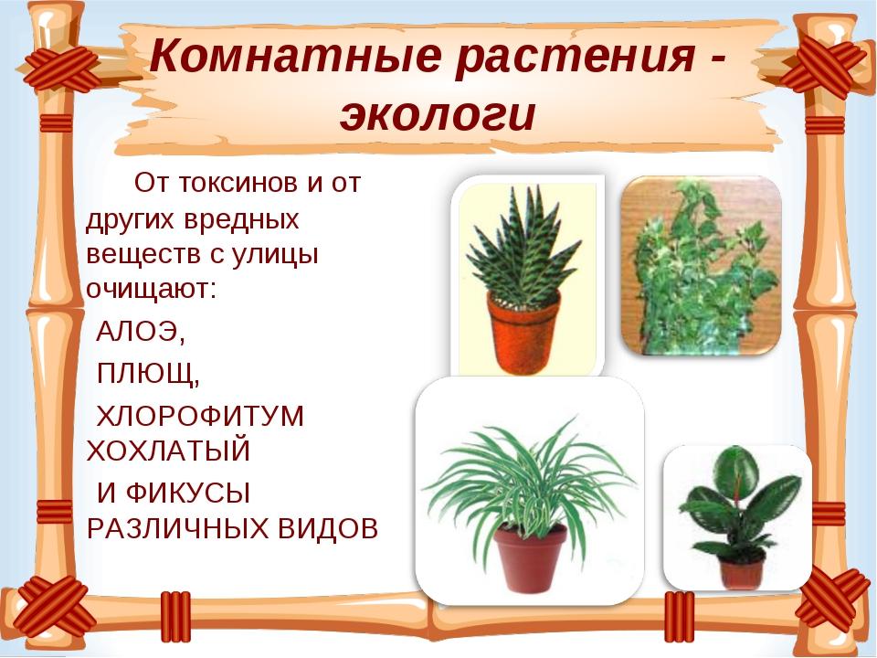 Комнатные растения - экологи От токсинови от других вредных веществ с улицы...
