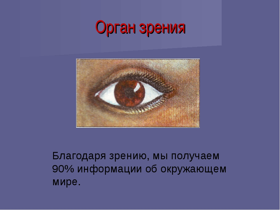 Орган зрения Благодаря зрению, мы получаем 90% информации об окружающем мире.