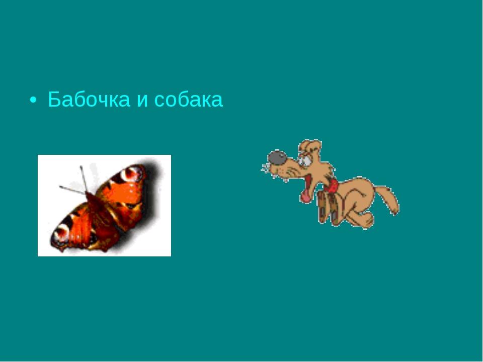 Бабочка и собака