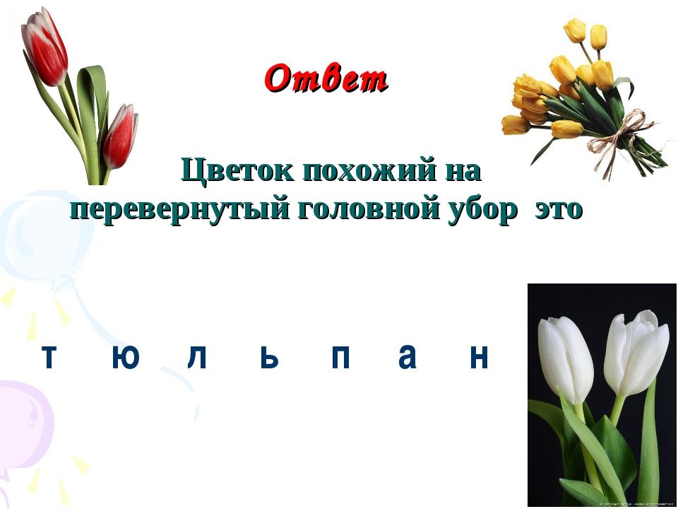 Ответ Цветок похожий на перевернутый головной убор это т ю л ь пан