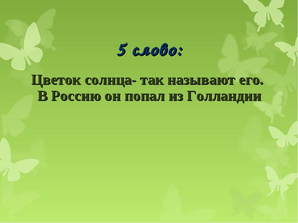 5 слово: Цветок солнца- так называют его. В Россию он попал из Голландии...