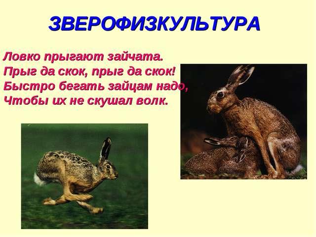 ЗВЕРОФИЗКУЛЬТУРА Ловко прыгают зайчата. Прыг да скок, прыг да скок! Быстро бе...