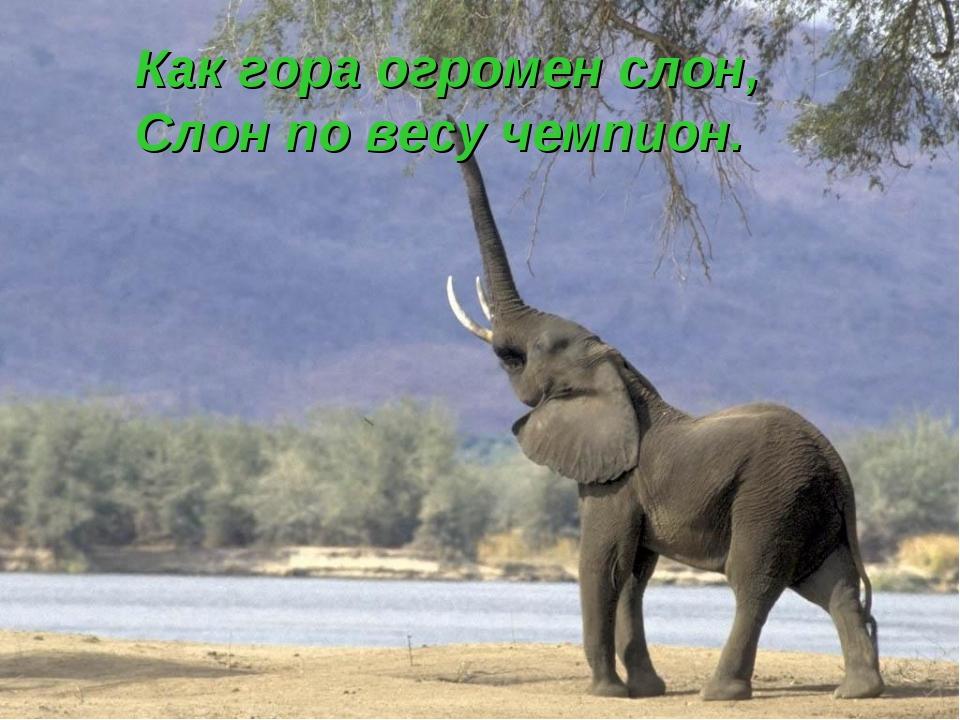 Как гора огромен слон, Слон по весу чемпион.