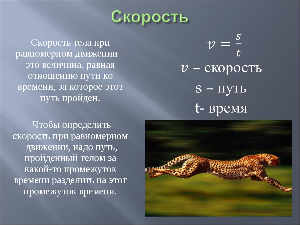 Скорость тела при равномерном движении – это величина, равная отношению пути...