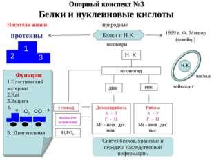 Опорный конспект №3 Белки и нуклеиновые кислоты Носители жизни 1 2 3 Функции: