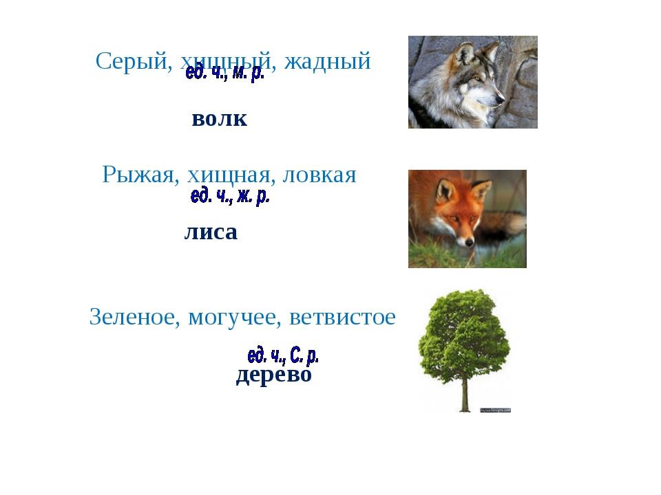 Серый, хищный, жадный волк Рыжая, хищная, ловкая лиса Зеленое, могучее, ветв...
