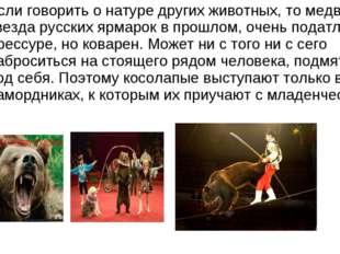 Если говорить о натуре других животных, то медведь, звезда русских ярмарок в